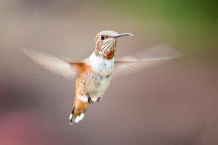 Medicijnwiel – Noorden – Kolibrie